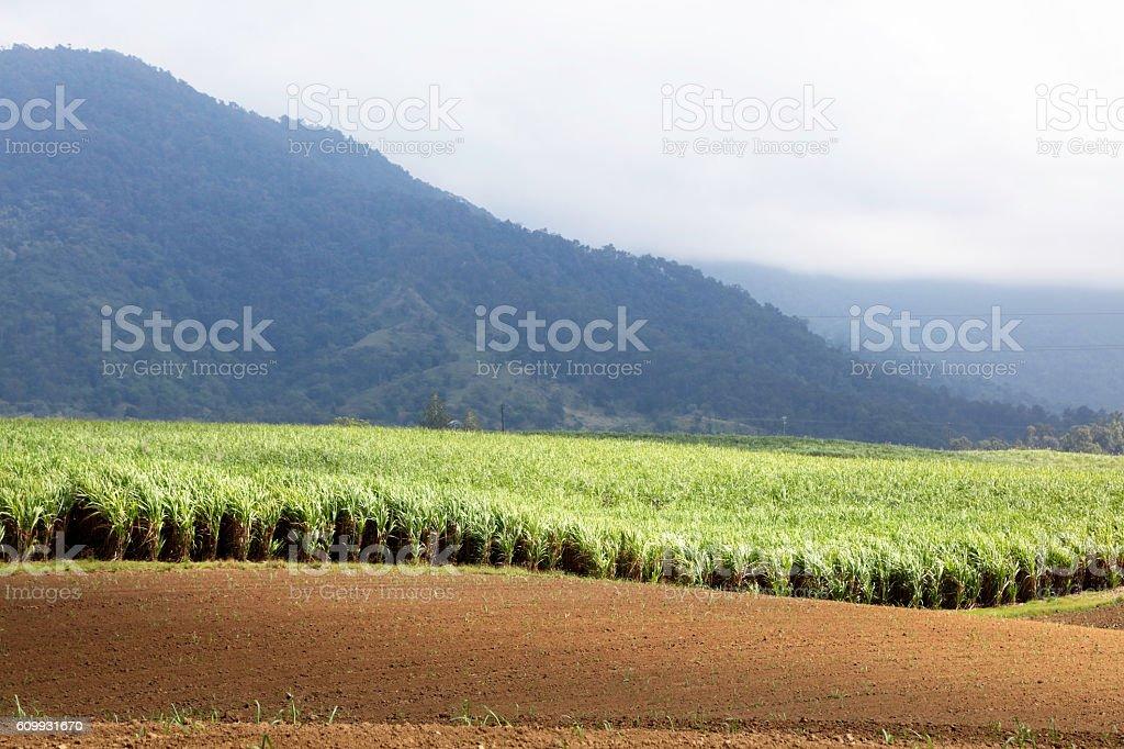 Farming in Queensland stock photo