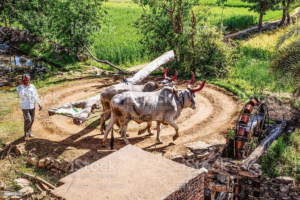 Farming in Rajasthan stock photo