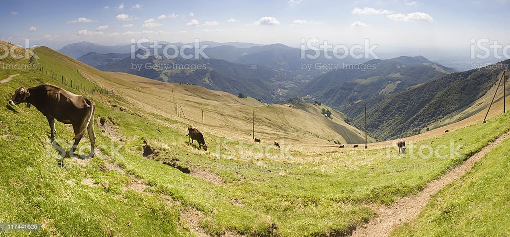 Farming in Switzerland. royalty-free stock photo
