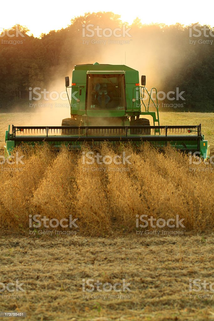 Farming in the sunset on such a beautiful evening royalty-free stock photo