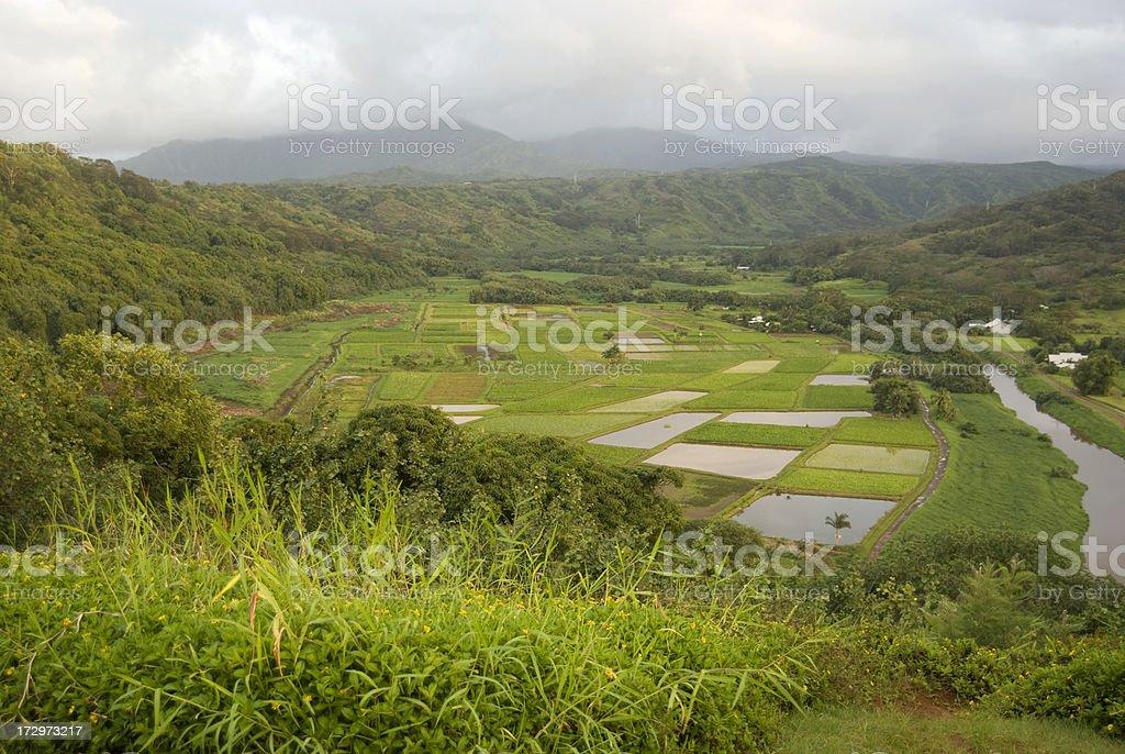Farming Industry in Kauai, Hawaii royalty-free stock photo