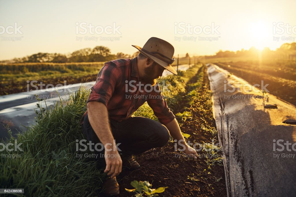 Farming is the vocation of optimists stock photo