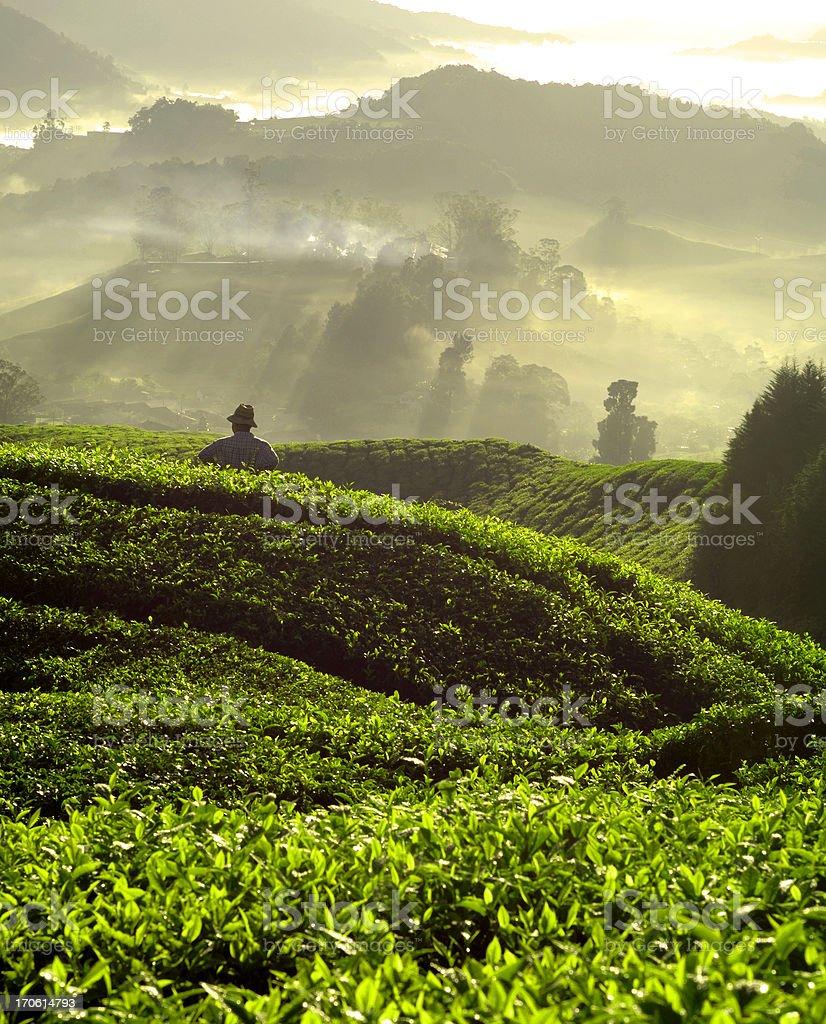 Farming royalty-free stock photo