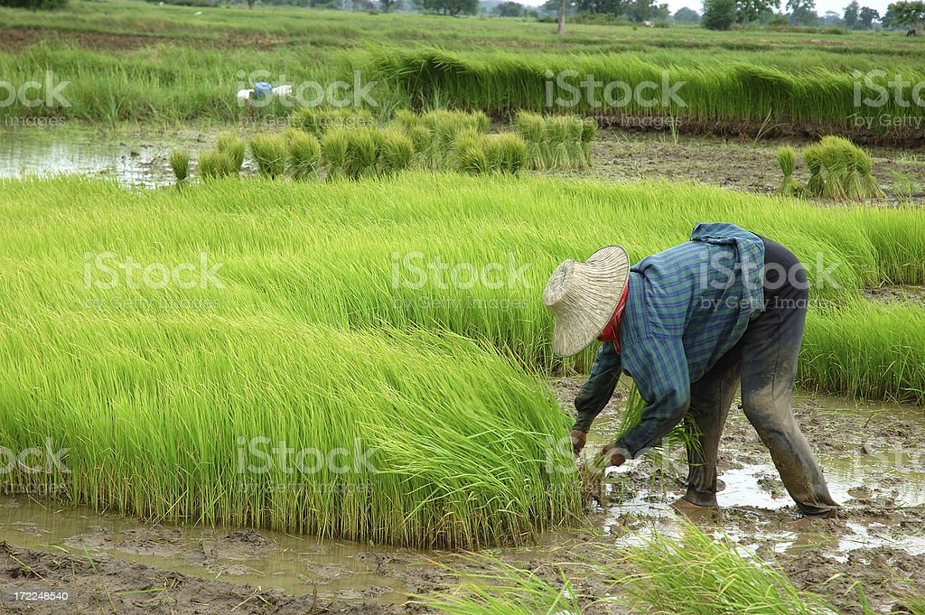 Farming stock photo