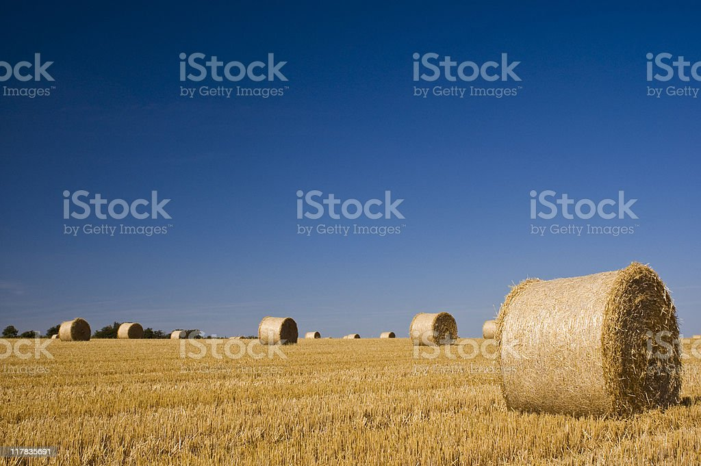 Farmland and copy space royalty-free stock photo