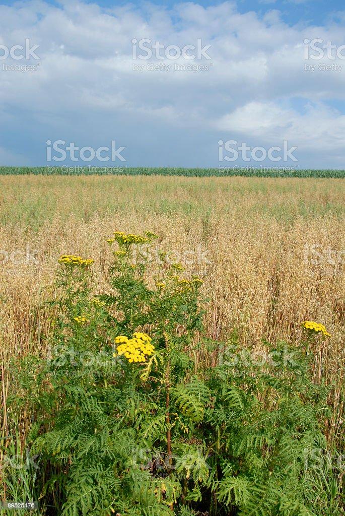 Farmland and wildflowers stock photo