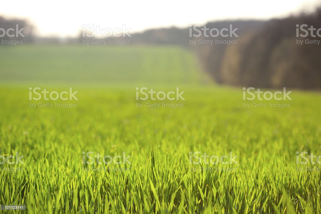 Farmland background, focus on front rows grass stock photo