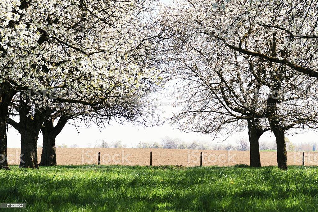 Farmland in Belgium in springtime stock photo