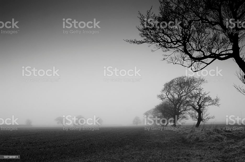 farmland in winter fog stock photo