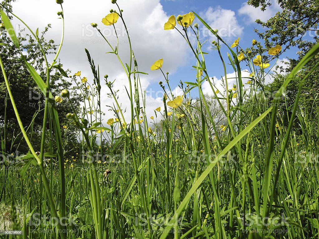 Farmland Meadow royalty-free stock photo