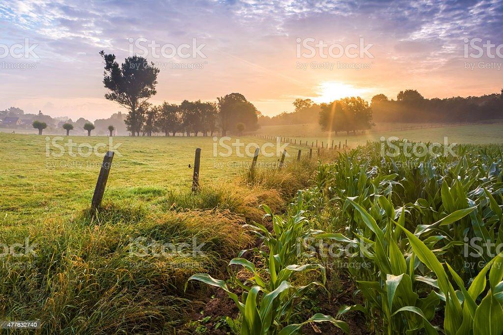 Farmland sunrise stock photo