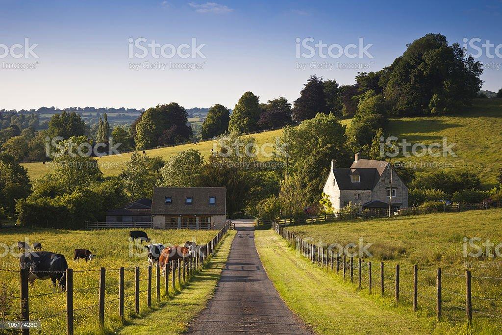 UK farmland with farmhouse and livestock at dusk. stock photo