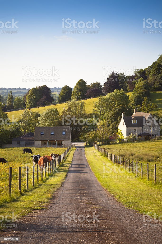 UK farmland with farmhouse and livestock at dusk stock photo