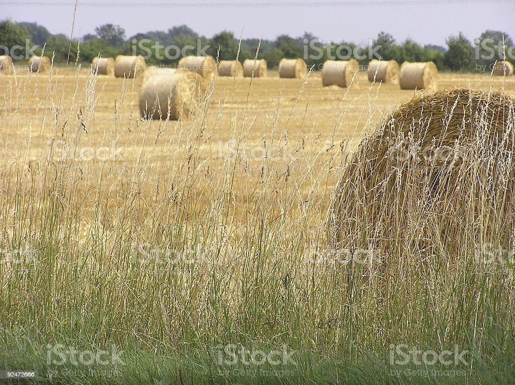 Farmland with hay-clenches royalty-free stock photo