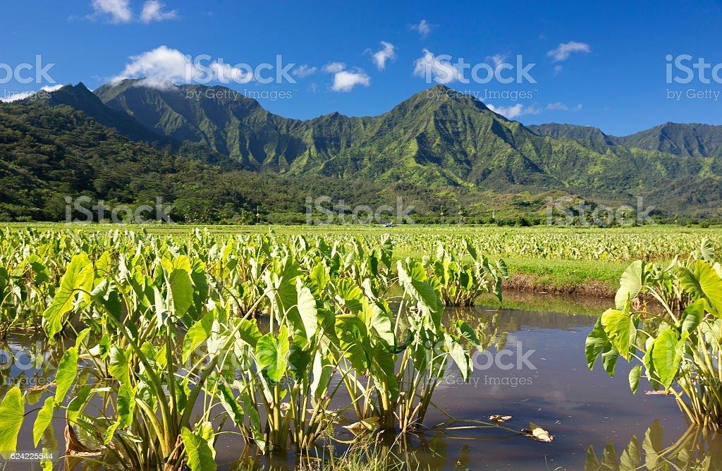 Farmlands of Hanalei Bay in Kauai, Hawaii stock photo