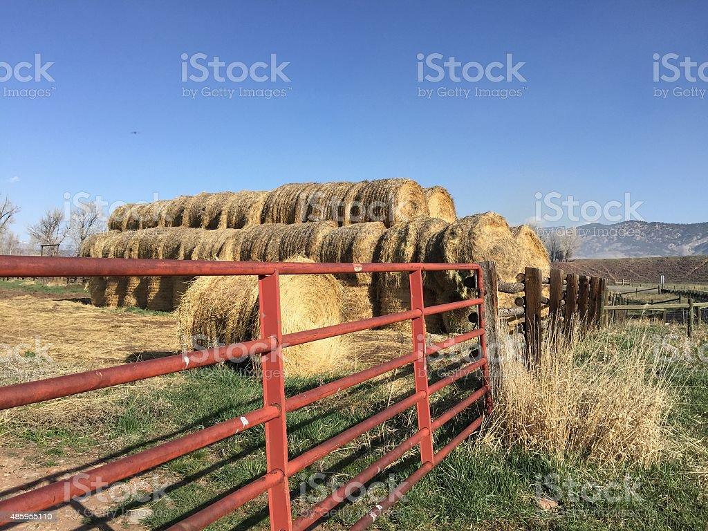 Farmlife stock photo