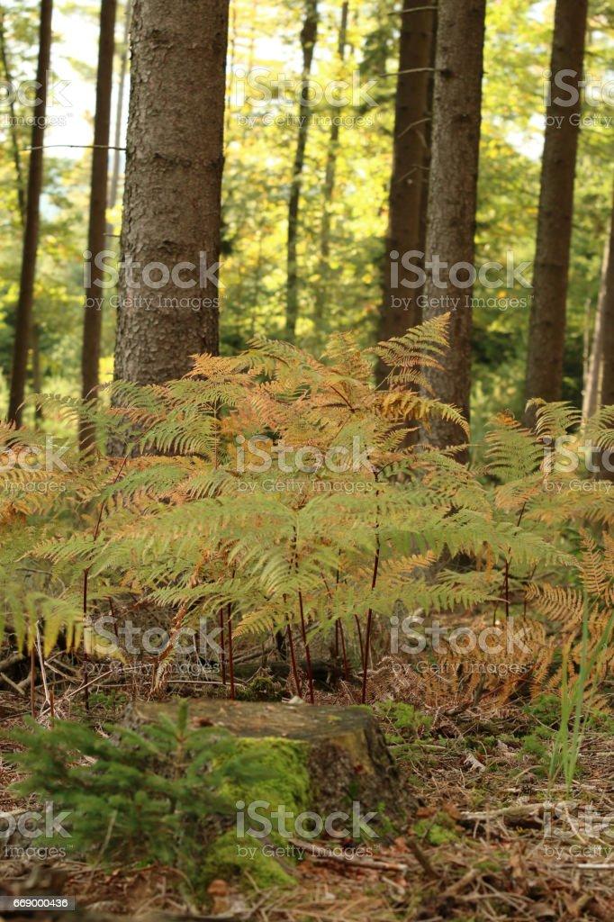 Farn im Wald stock photo