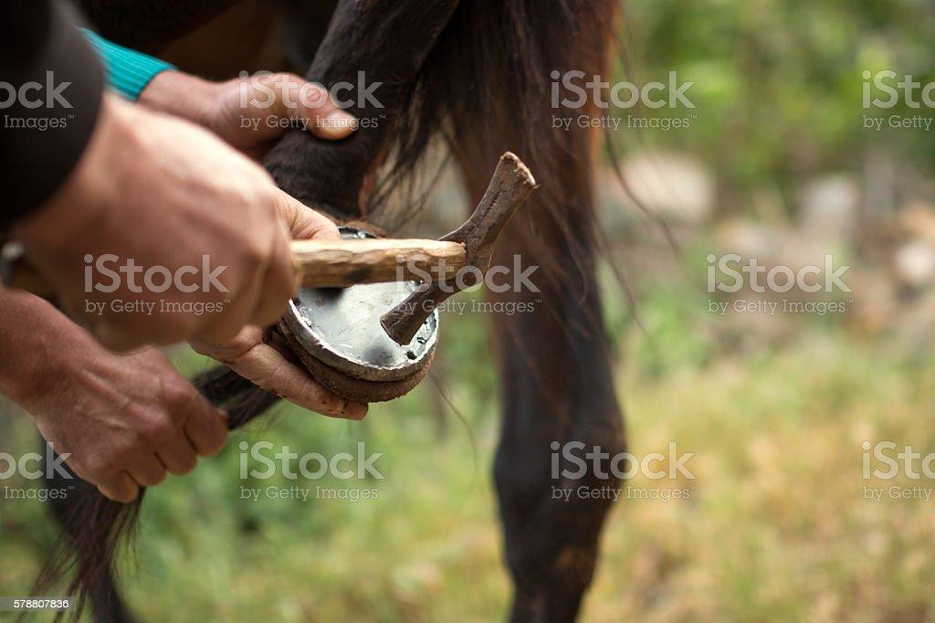Farrier at work on horses hoof stock photo