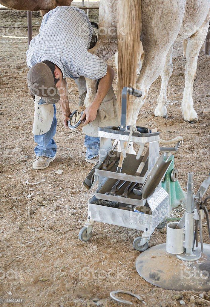 Farrier Fitting horseshoe to hoof royalty-free stock photo