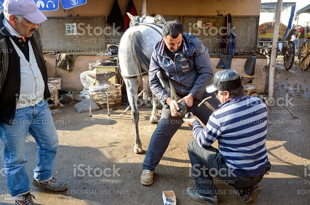 Farrier. Horse's hoof nailing on shoes stock photo