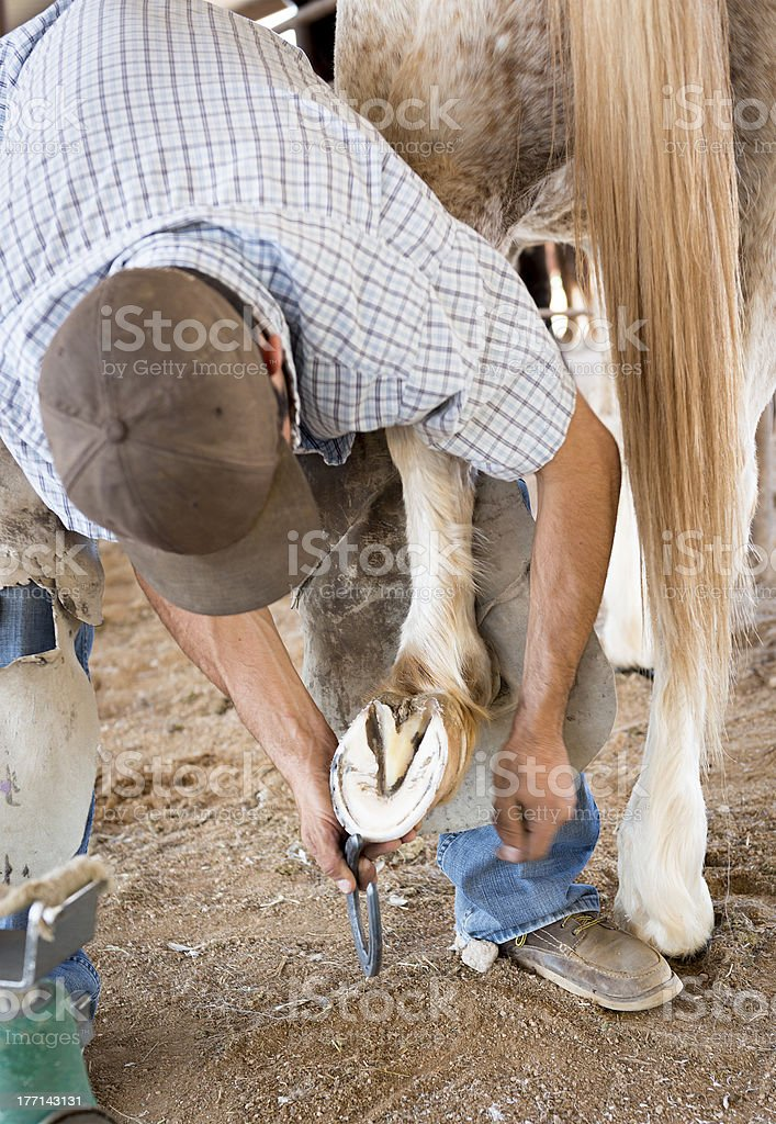 Farrier trimming hoof royalty-free stock photo