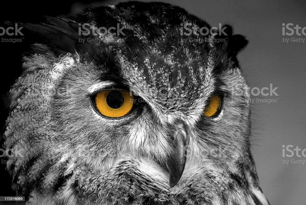 Fascinating eyes stock photo