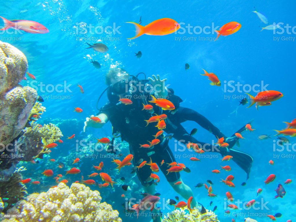 fascinating holiday in Egypt. Diving at the coral reefs stock photo