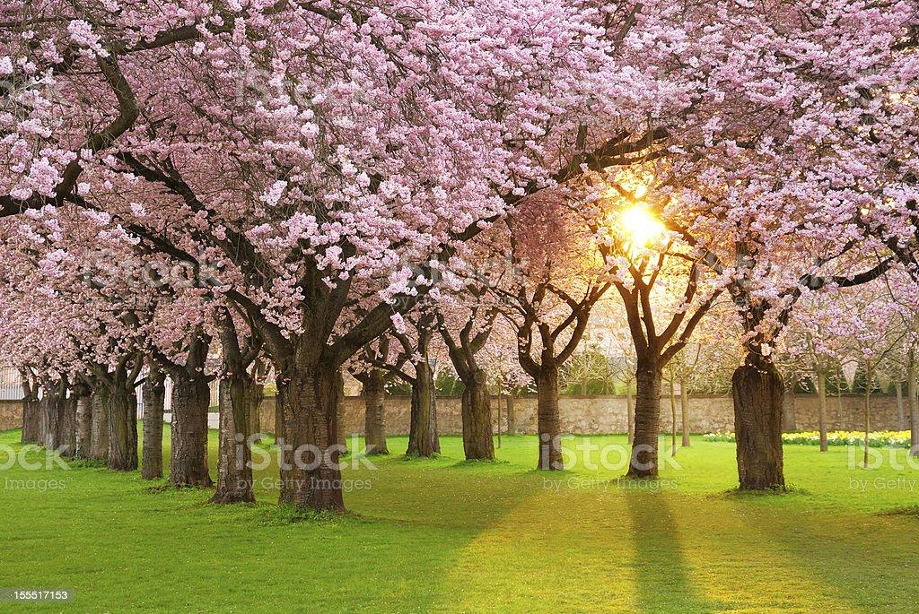 Fascinating springtime scenery stock photo