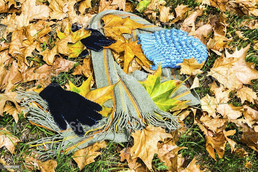 fashion among autumn leaves royalty-free stock photo