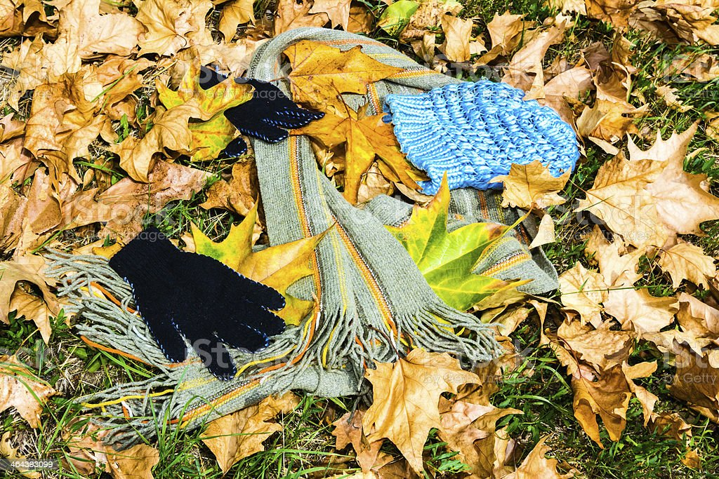 fashion among autumn leaves stock photo