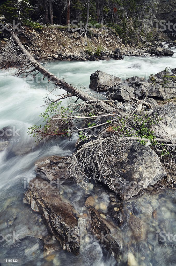 Fast mountain stream in Maligne Canyon, Canadian Rockies royalty-free stock photo