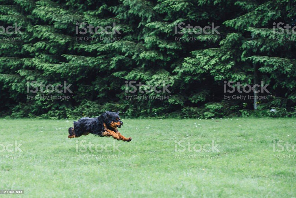 Fast runner stock photo