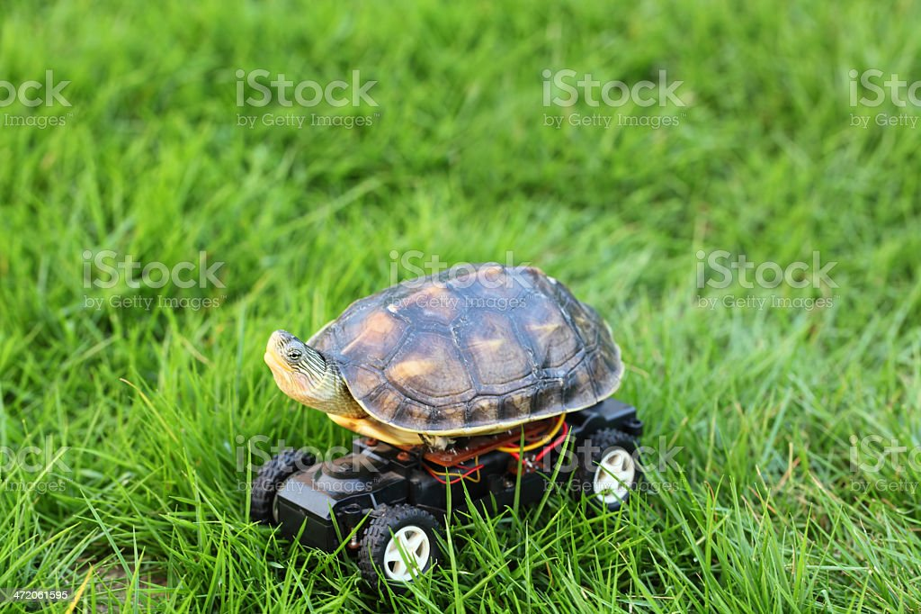 Fast Turtle stock photo