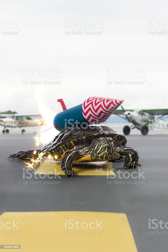 Fast turtle with rocket propulsion on the runway stock photo