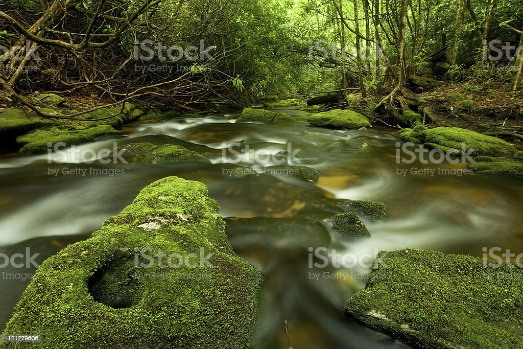 Fast-flowing Rainforest Stream royalty-free stock photo