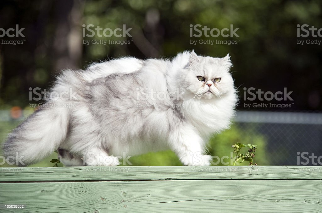 Fat Cat stock photo