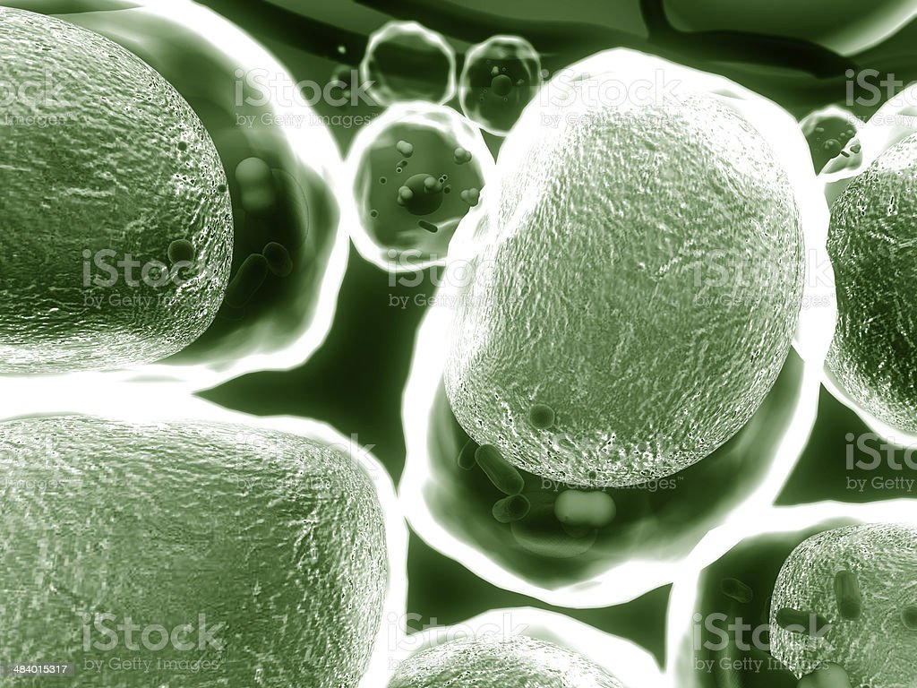 fat cell, cholesterol stock photo