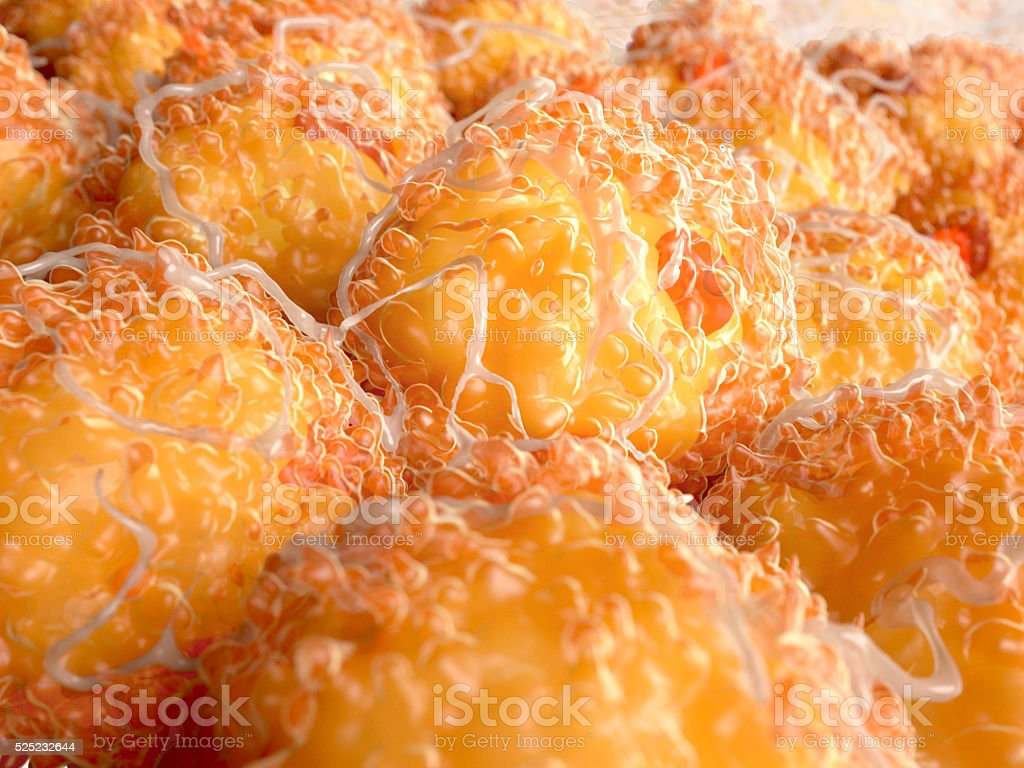 Fat cells stock photo