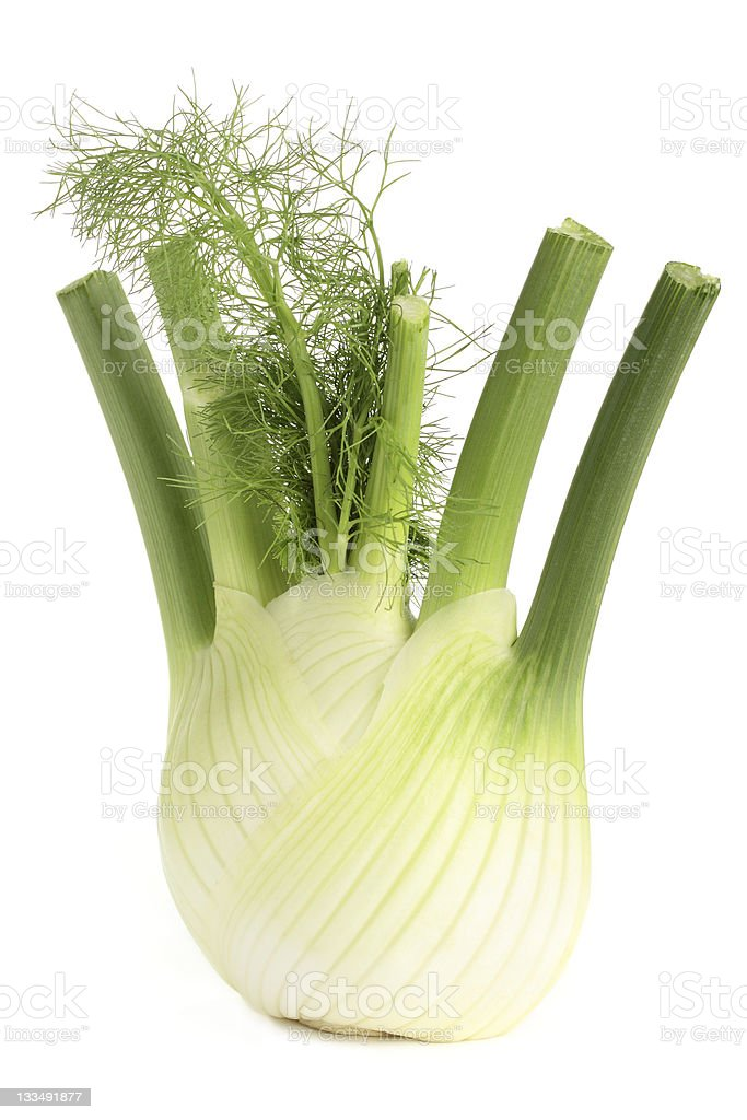 Fat fennel root with green stems and fresh leaves stock photo