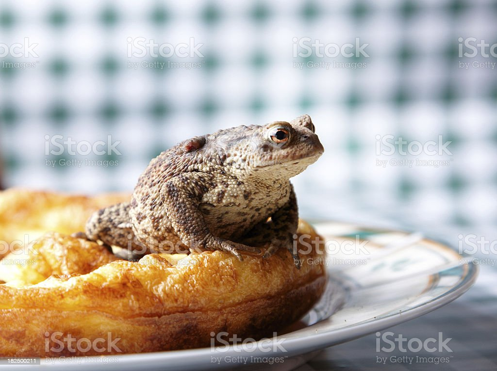 Fat toad sitting on yorkshire pudding royalty-free stock photo