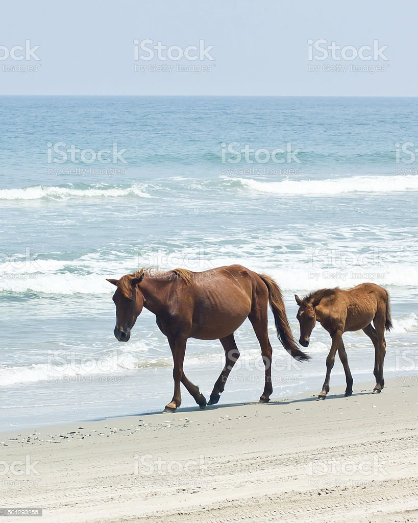 Father and Colt on the Beach stock photo