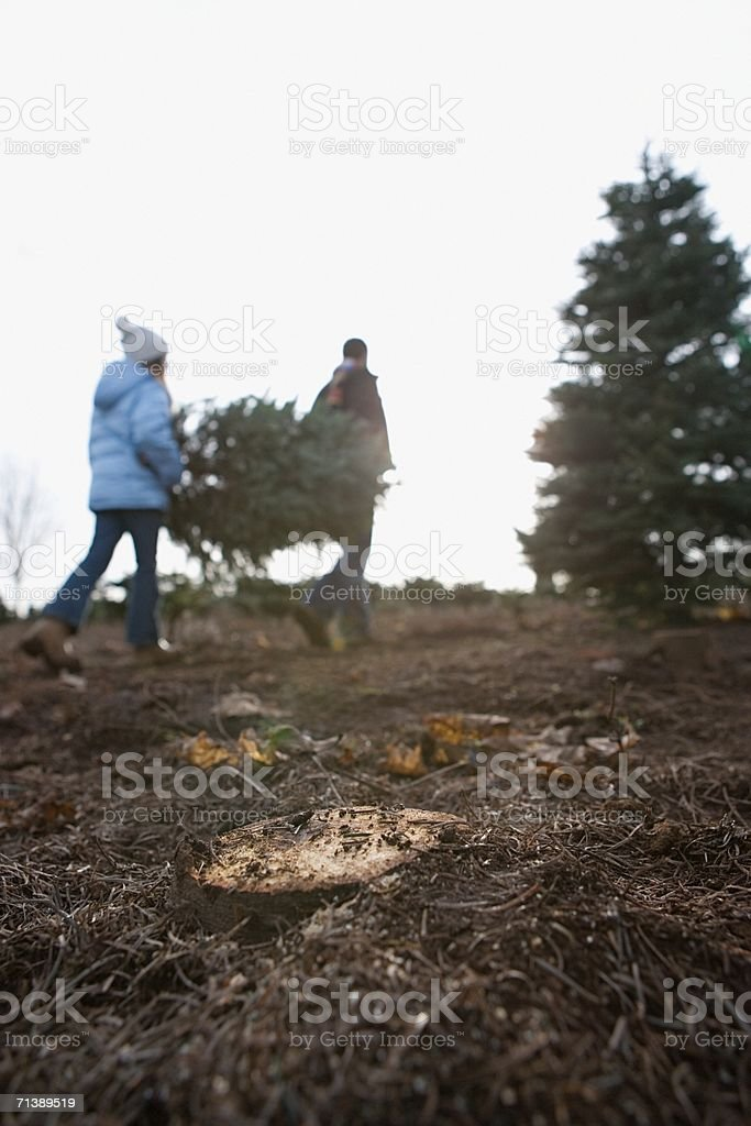 Father and daughter carrying Christmas tree royalty-free stock photo