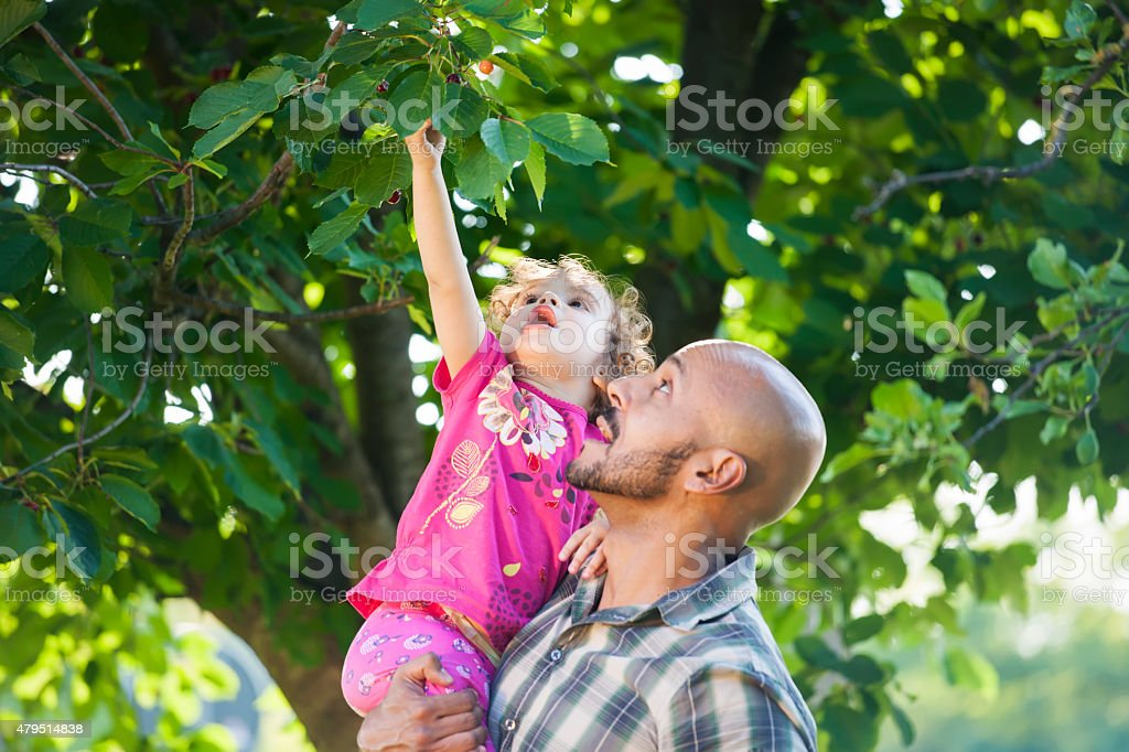 Father and daughter picked fresh organic fruits on a tree stock photo