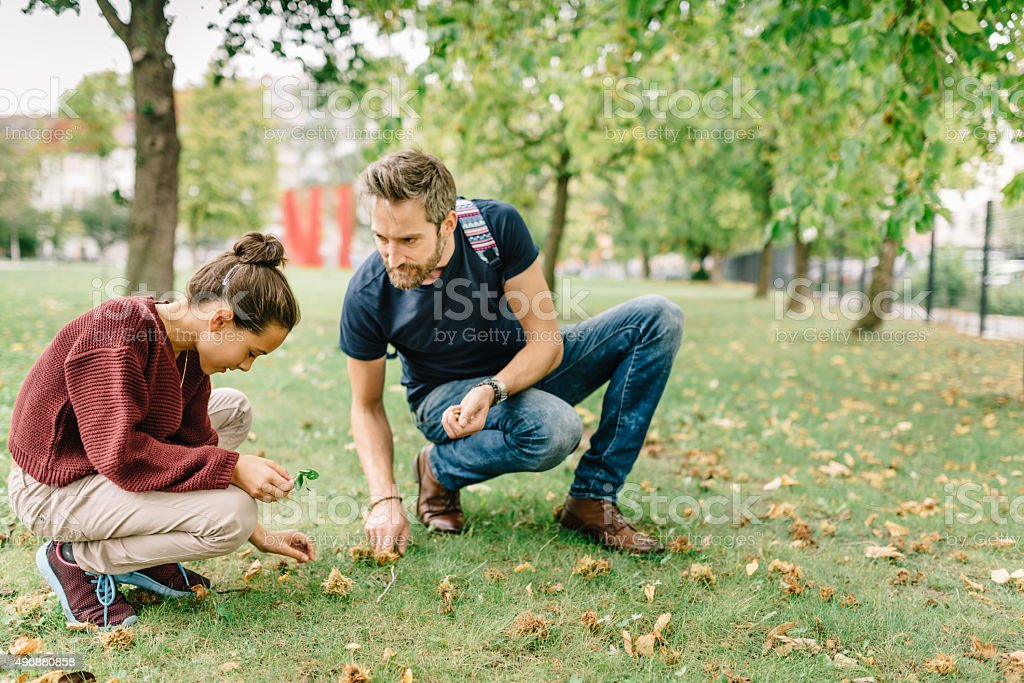 father and daughter picking up hazelnuts stock photo