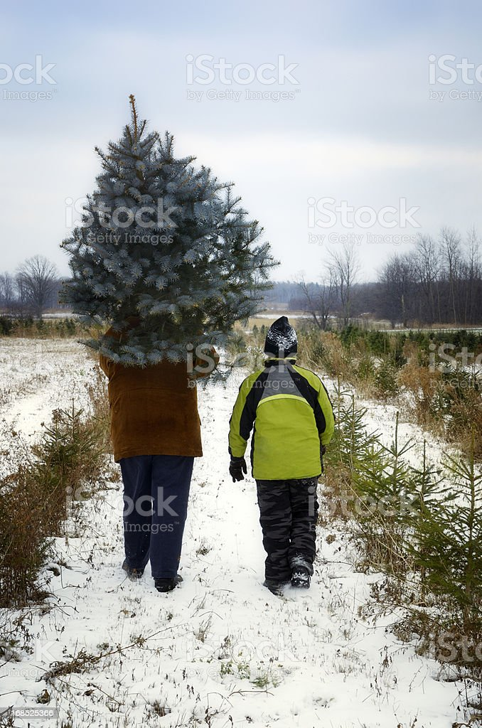 Father and son at Cut your own Christmas tree farm stock photo