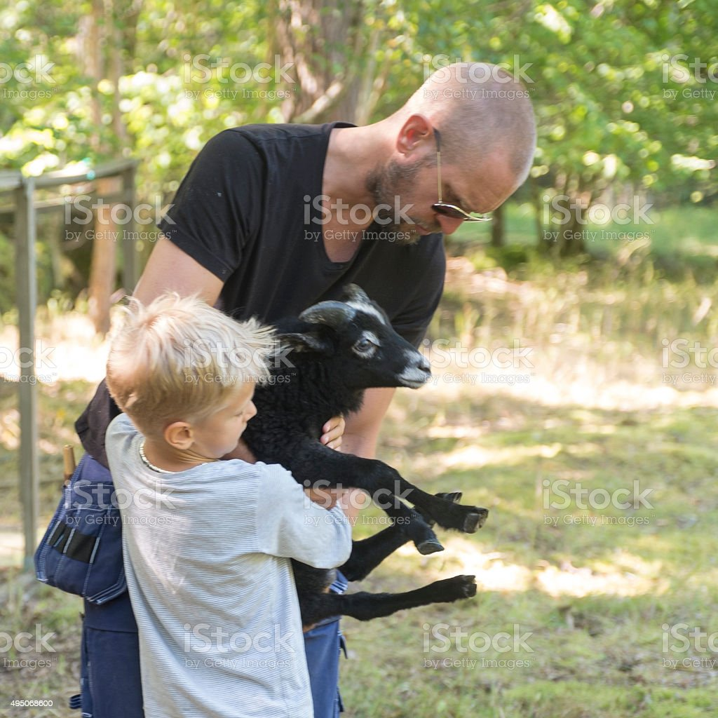 Father and son caressing small black lamb. stock photo