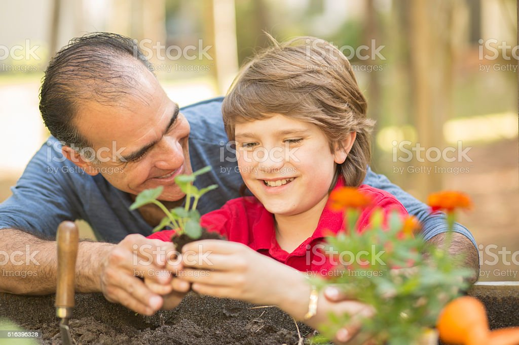 Father and son enjoy gardening in backyard. Homegrown organic vegetables. stock photo