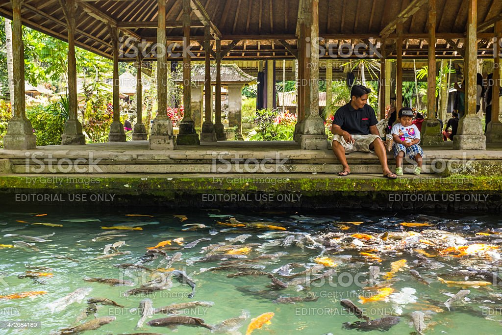 Father and son feeding fish in Gunung Kawi temple stock photo