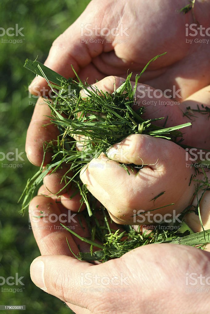 Father and Son Holding Grass Clippings royalty-free stock photo