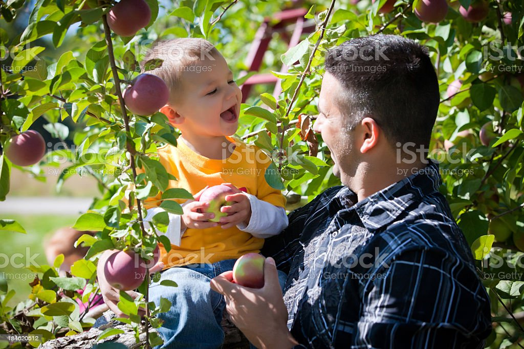 Father and son in a orchard picking apples royalty-free stock photo